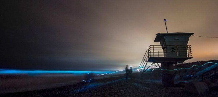 Estados Unidos: el espectacular fenómeno de la marea roja que tiñe de azul fluorescente el mar de San Diego